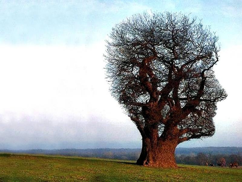 pensamiento arborescente